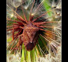 A Bug by Dell Gann
