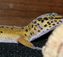 Sam - A Leopard gecko by Sharon Perrett