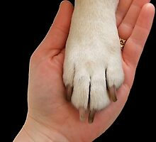 Dog Paw In Hand by amanda metalcat dodds