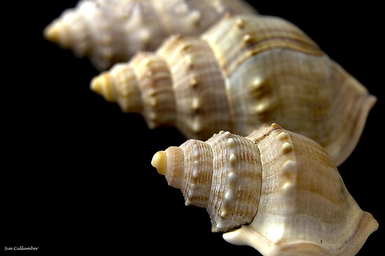 Shells by Sue  Cullumber
