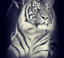 Black & White Sumatran Tiger by SkatingGirl