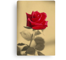 Red Rose Flower Isolated on Sepia Background Canvas Print