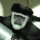 Sad monkey by Stan Daniels