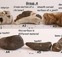 Does anyone know fossils? Group A by MooseMan