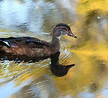 Duck at Sunset by Teresa Zieba