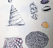 Shell Studies with Grasshopper by rdshaw