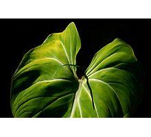 On Friendship:  Liannes Leaf... Kauai Sensual Series Photographic Print