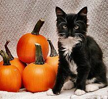 Cleo N Pumpkins by Corinne Noon