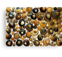 Shell Background Canvas Print