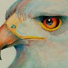 eagle eye by gerardo segismundo