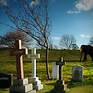 Elephant Graveyard by Dave Hiskey