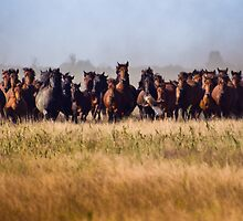 Flight Before the Wild Horses' Charge by Kira Hagen