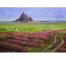 mont st. michel flowers and grazing sheep Photographic Print