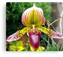 Purple and Yellow Orchid Canvas Print