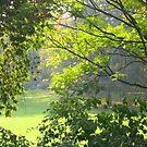 Sunlight through trees by lizzyforrester