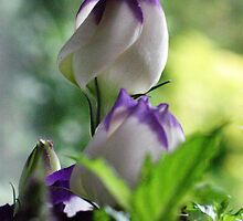 Lisianthus Flowers  by jacqi