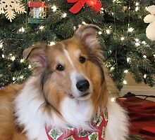 Christmas Collie by Jan  Wall