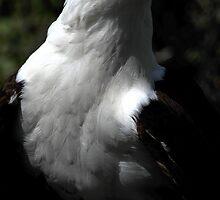 Sea Eagle by Anne Smyth
