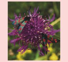"Greater Knapweed with ""6-spot Burnet"" Moths Kids Clothes"