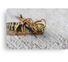 Dead Wasp Canvas Print