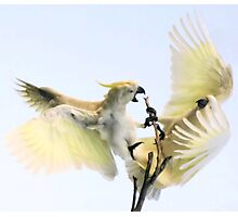 ~Feathered Rivalry~ Photographic Print