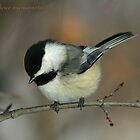 Chickadee sunset by Normcar