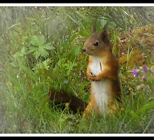 Squirrel by magnemyhren