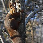 Another squirrel by magnemyhren