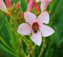 Sleeping Bee by Lee  Travathan