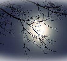 moonlight by keysimagine