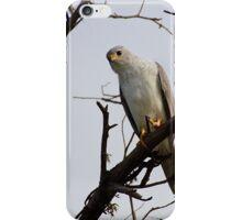 The Grey Goshawk iPhone Case/Skin