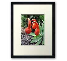 Painted Gourds, Toowoomba, Australia Framed Print