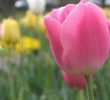 Tulips  Calendar by Melissa Park