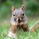 Red Squirrel by Robert Jenner
