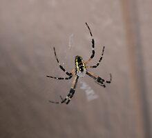 Spider III by KBdigital
