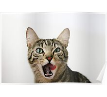 Tilly Tabby Tongue Twister Poster