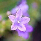 A lovely Flower by Nala
