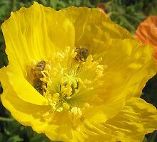 Bee Happy by Melissa Park