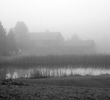 On Foggy Pond by marchello