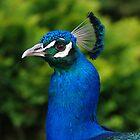 Birds by Wzard