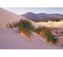 Grass on Dunes Photographic Print