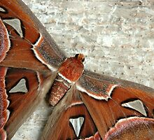 butterfly by bayu harsa