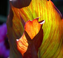 Backlit Flower , leaf by Stan Daniels