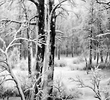 Black and White Frost by muniralawi