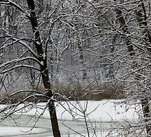 Old Woman Creek In Winter 3 by SRowe Art