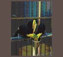Toucanimated by Kathryn Eve Rycroft