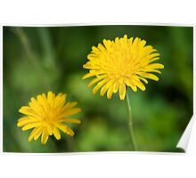 Yellow Flowers Poster