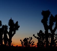 Joshua Tree Sunset by Laurie Search