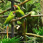 The odd couple, Costa Rica by Guy Tschiderer