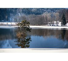 Trees in the Lake Photographic Print